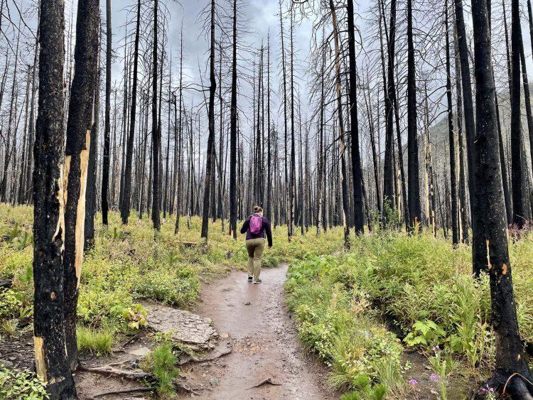 Blakiston Falls hike through the trees