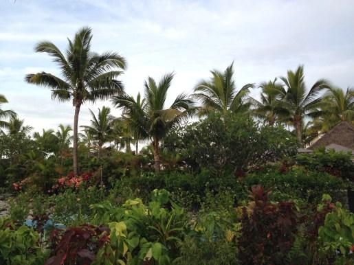Palm trees galore
