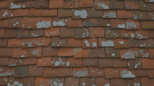 Roof Fungus: Not a fun-guy anymore