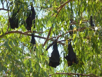 Bats loudly occupying a tree at the beginning of the hike