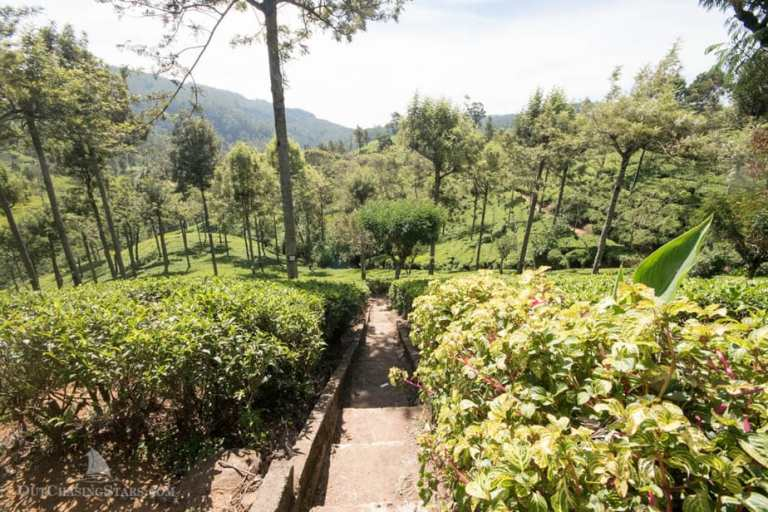 A Day in Nuwara Eliya:  Sri Lanka's Tea Plantations