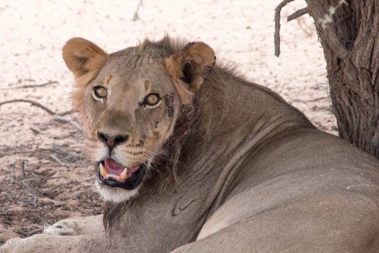 Kgalagadi Transfrontier Park: A 3-Night Safari