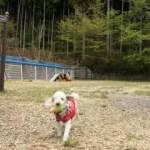ドッグラン・ドッグフリーサイトがある関東のオートキャンプ場 11選