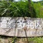 【空撮】40℃超えの日には涼しい高原ツーリングが最高!【4K】