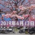 #670 【VTR250F】 今年最後の花見ツーリング 250本しだれ桜