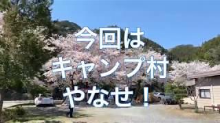 [キャンプ村 やなせ]お花見コラボキャンプ!