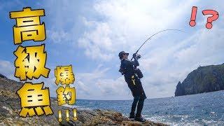 穴場だらけの無人島で釣りしたら「謎の高級魚」が爆釣でお祭り騒ぎwww【草垣群島編】