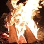 焚き火LIVE【弾丸キャンプ】