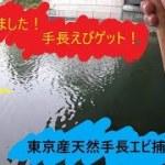#手長エビ【夫婦で釣り】シーズン到来!東京で手長エビ釣り。
