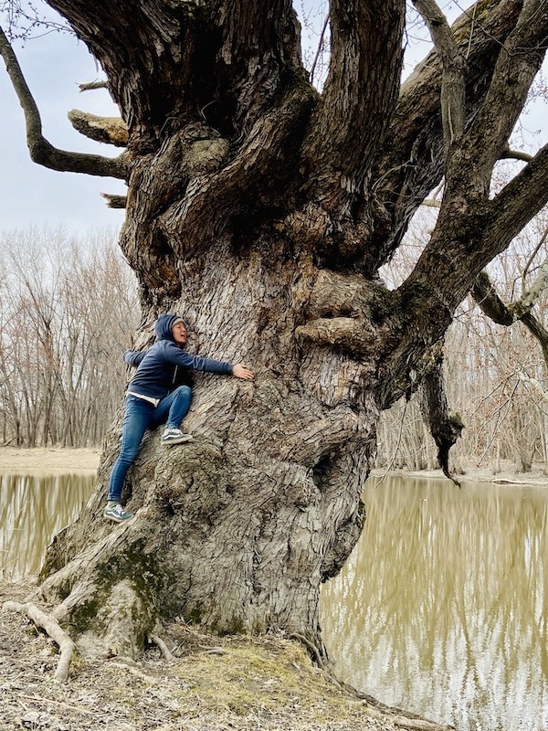 day hikes in Northern Vermont-big tree