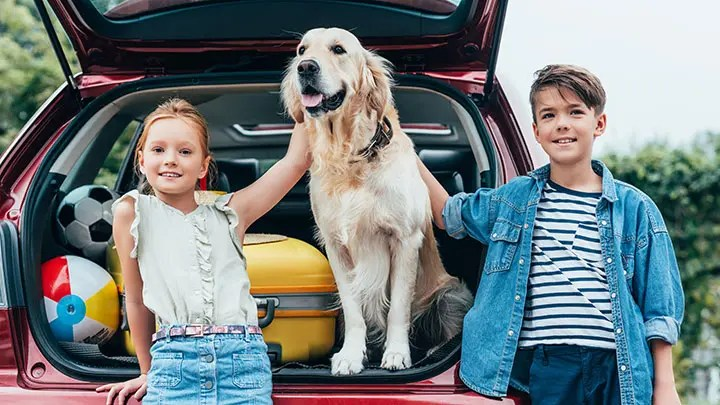 8 Best Cars For Dogs In 2020 Outdoor Dog World