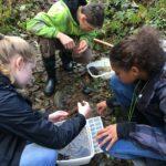 Students looking for macroinvertebrates