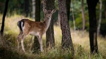 best deer baits