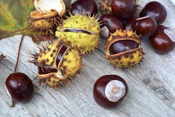 best deer bait chestnuts