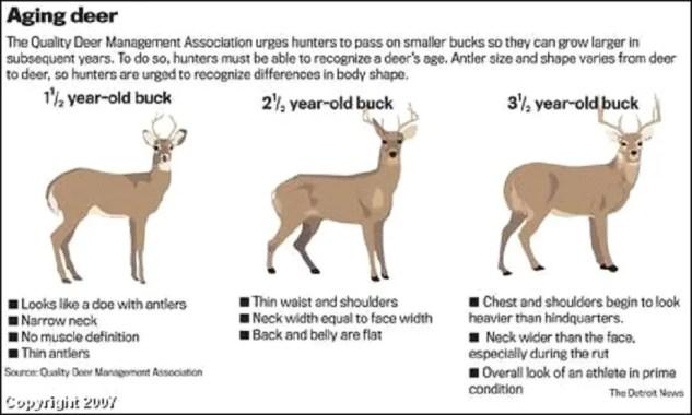 how long to hang a deer