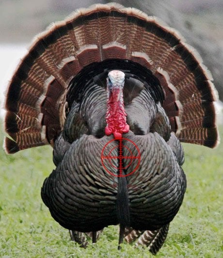 Where To Shoot A Turkey With A Bow 2