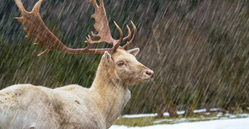 deer hunting in the rain
