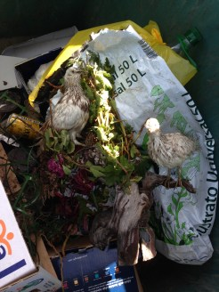 Strange stuffed bird ornament, in a wheelie bin!