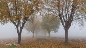 D60 Foggy Morning 007