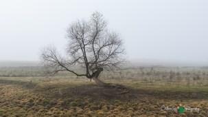 D60 Foggy Morning 011
