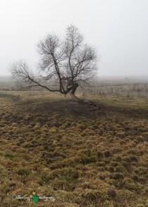 D60 Foggy Morning 012