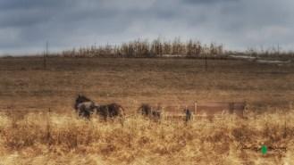 Blair Amish Project 104