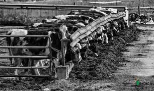 Blair Amish Project 025-Edit