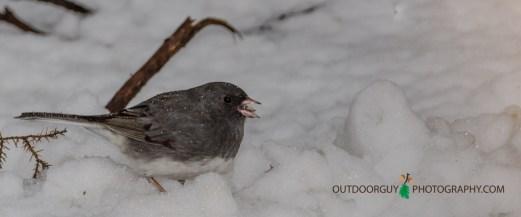 Backyard - Snowy April 003