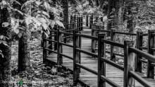 Gooseberry Falls Park walk-way