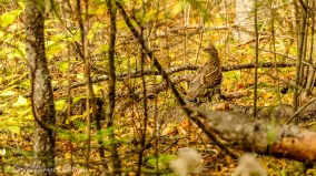OutdoorGuyPhotography-3659