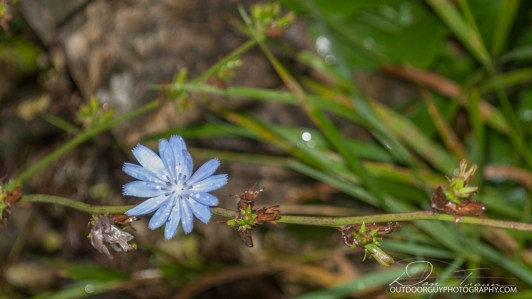 OutdoorGuyPhotography-9337