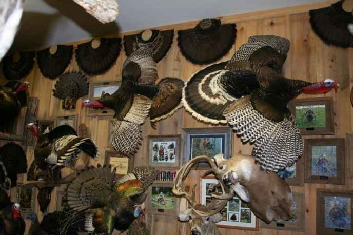 beginners guide to turkey hunting