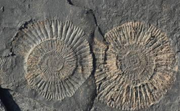 Steine klopfen: Fossilien suchen mit Kindern
