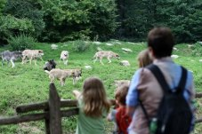 Wildpark Bad Mergentheim