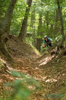 Waldiger Flowtrail mit Laub