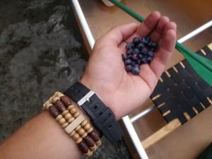 Fresh Blueberries in BWCA