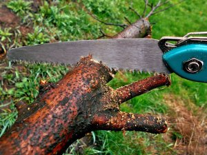 Camping bow saw