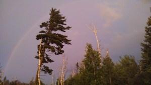 White Pine North Shore Rainbow