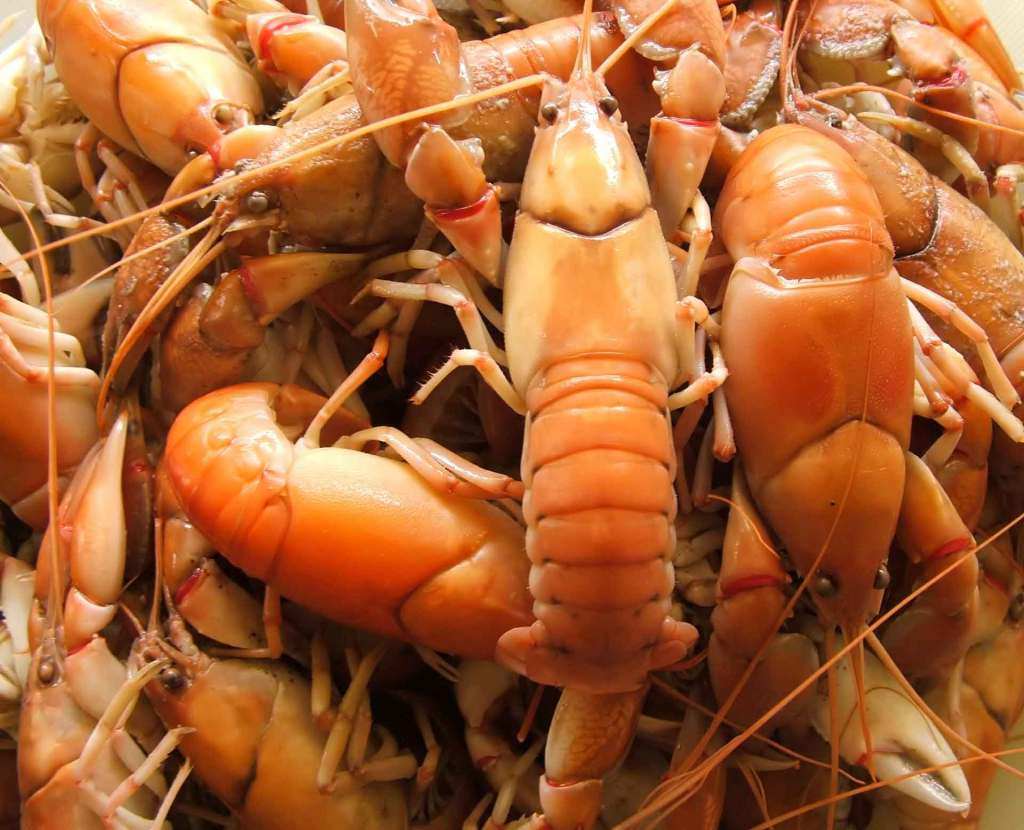 Cooked Yabbies