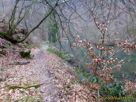 Waldschluchtenweg - 010