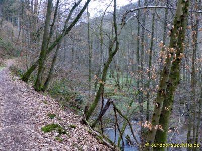Waldschluchtenweg - 024
