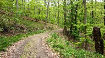 0065 Wandermarathon Donnersberg DSC05189
