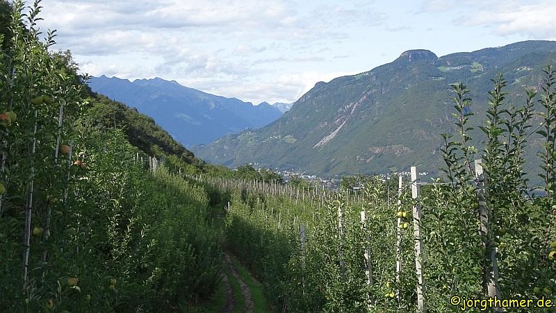 Apfelplantagen Südtirol
