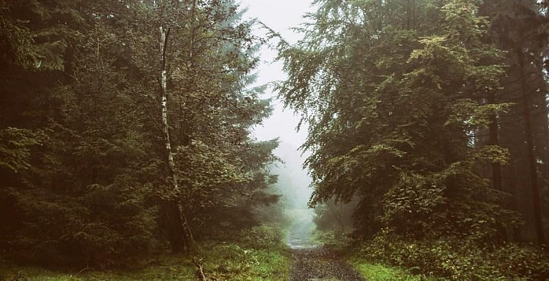Der Harz lädt mit einsamen Pfaden zum Wandern ein