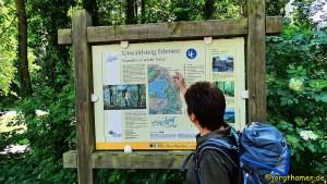Wandern am Edersee - Urwaldsteig in drei Etappen