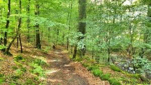 Wandern am Edersee - Urwaldsteig