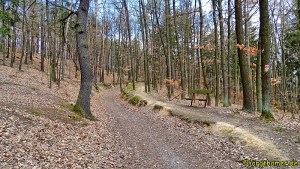 Auf dem Lehrpfad durch den Wald bei Neubuschitz