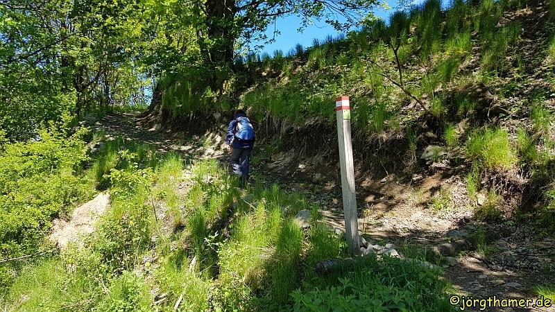 Bergmähwiesenpfad bei Hartmannshain