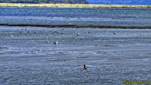 Vogelparadies Langenwerder