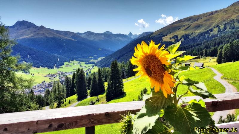 Foxtrail Davos - Blick von der Strela Alp